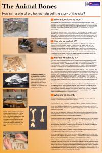 Animal bone analysis 1