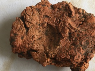 A piece of fired clay with finger nail impressions and finger prints or fabric impressions preserved in its surface.